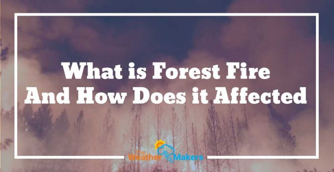 what is forest fire